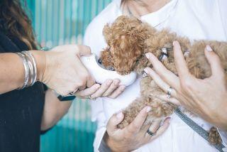 examen oposiciones veterinaria